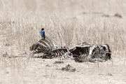 Life and Death in Tarangire