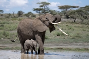 Infant and Mother Elephant