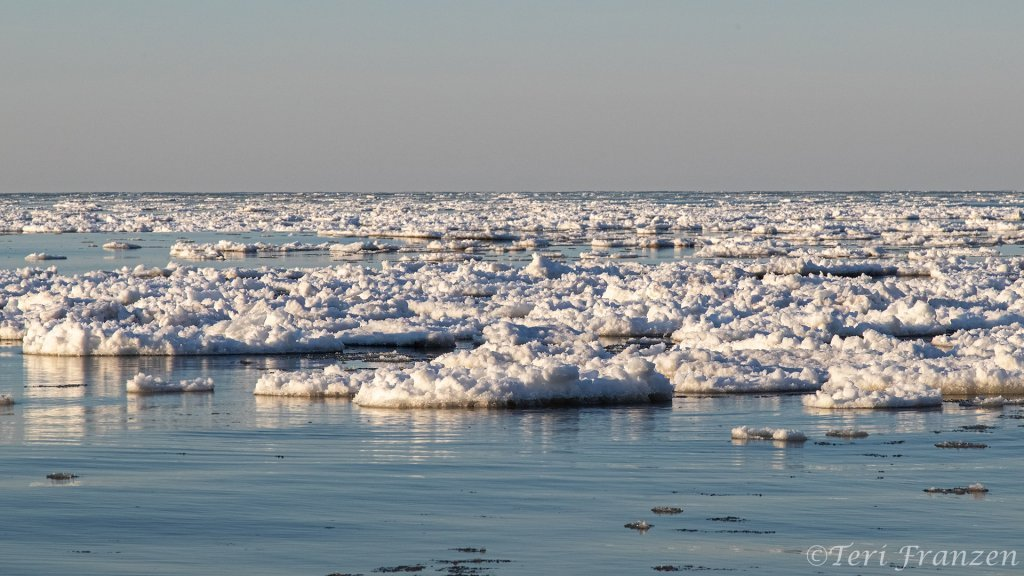 Ice Floes Littered the coastal waters of Lake Ontario