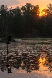 Sunrise at the pond