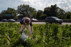 Salvaging Eggs and Milkweed