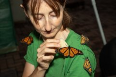 Feeding Monarchs