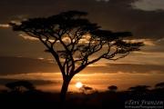 Ndutu Sunset